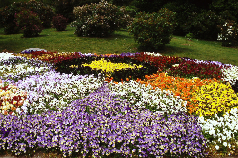 2016 Special Citation Award recipient, Rochester Garden Club, recently restored the Highland Park Pansy Bed.